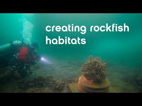 Creating Rockfish Habitats Using Sculptures