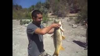 uşak balık avı  trofe sazan  trophy carp fishing big fish