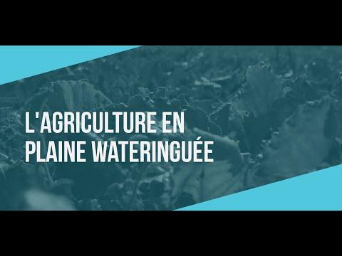 Polder itinéraire | L'agriculture en plaine wateringuée
