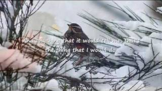 """ Snowbird ""   -   ( Anne Murray )"