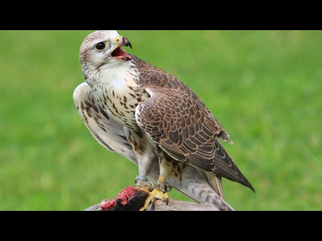 Иностранцев задержали на охоту на редких птиц