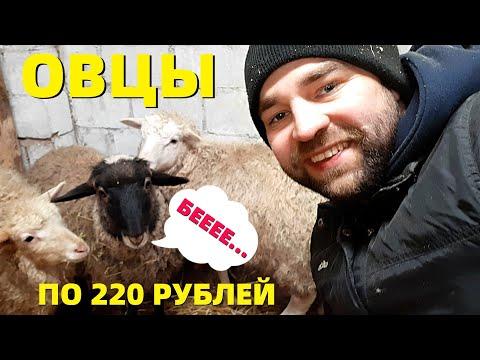 , title : 'КУПИЛ ОВЕЦ ! ОБЗОР большой Татарской ФЕРМЫ