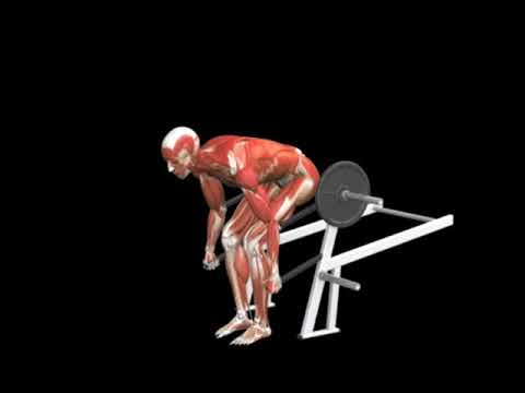 Bent-Over Row (Lever)