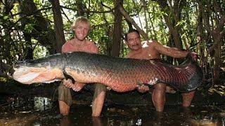 Giant Arapaima In Amazon River Canda - FISH MONSTER HUNTING