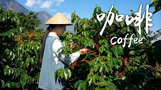 Video : China : YunNan coffee on a winter day