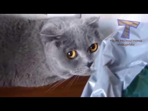 Bọn mèo nó cũng biết xấu hổ khi bị phát hiện làm chuyện xấu các bác ợ, éo như người