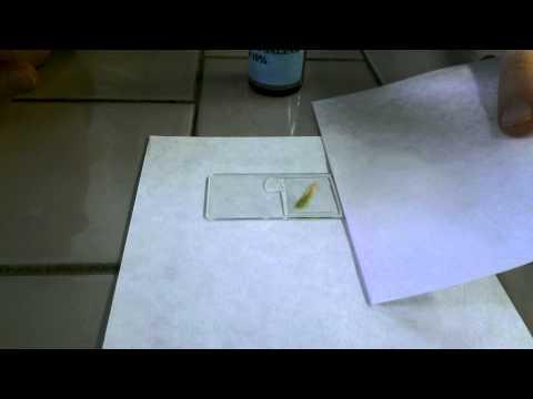 Analoghi droga Valz e prezzi