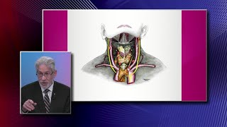 Parathyroid Glands: Function