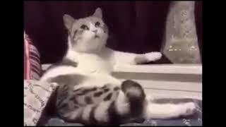 Рассудительный кот (пародия)