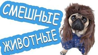Смешное видео про Животных Funny Animals