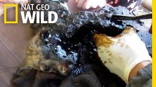 Three Puppies Get Stuck in Black Tar—Watch What Happens Next | Nat Geo Wild
