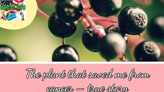 The plant that saved me from cancer, true story   Useful info