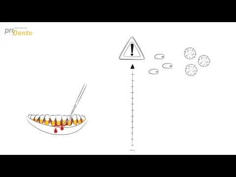 Die Bandwürmer die Aufzucht