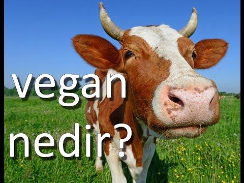 Vegan Nedir? Veganizm Nedir?