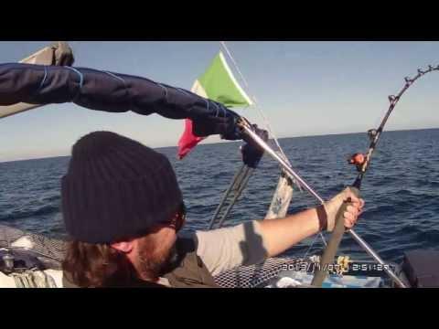 La pesca su un crucian nella caduta su una verga di galleggiante di video