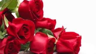 Reflexión: Rosas para mi amor