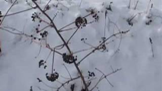 The Wassail Song (Traditional)