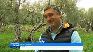 Mirëmëngjesi Kosovë - Kronikë - Ullishta e Valdanosit - Vlerë e Ulqinit 10.05.2021