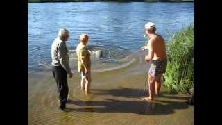 Рыба (гигант) поймана в Волге (Самара) Big Fish