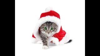 Подборка приколов с животными/ Кошки #8