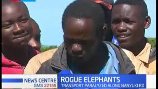 Decry in Nyeri as rogue elephants invade pathways paralyzing transport along Nanyuki road