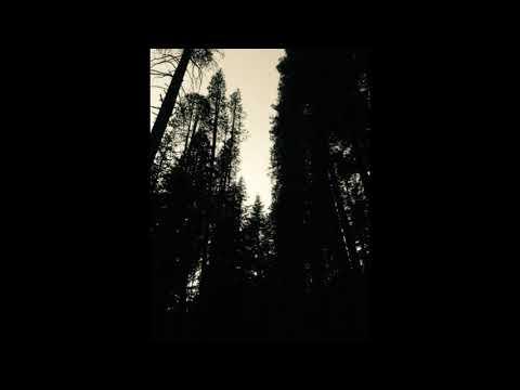 Vilkas - Dreaming True