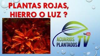 Plantas rojas, hierro o luz