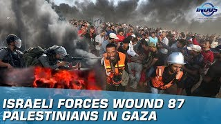 Israeli Forces Wound 87 Palestinians In Gaza   Indus News