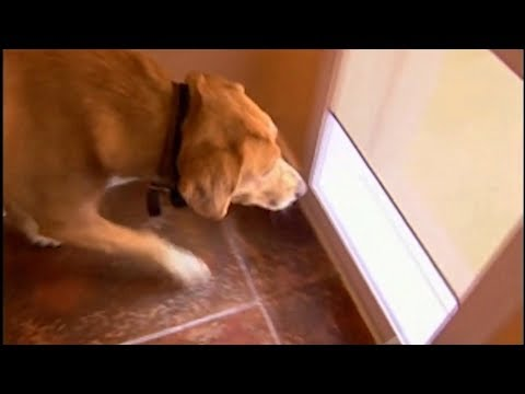 Best Electronic Dog Doors Top 5 To Consider Dognutrition