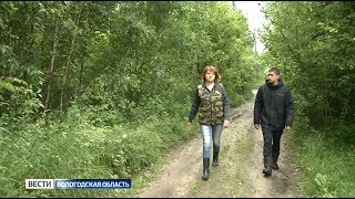 В Вологодской области ищут двух человек, заблудившихся в лесу