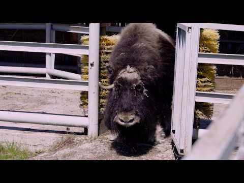 Как живет зоопарк «Орто Дойду» без посетителей