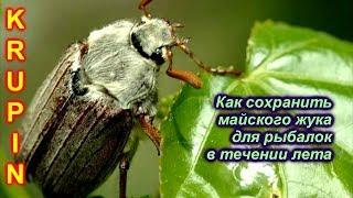 Щука когда и где ловить майских жуков