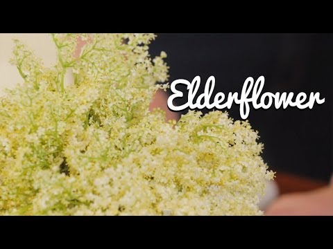 Video Home-Made Elderflower Cordial - Crumbs