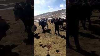 The Handsome Horsemen Of Tibet