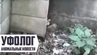 ШОК / ЭЛЬФ ПОПАЛСЯ на видеокамеру детей / СТРАШНОЕ ВИДЕО