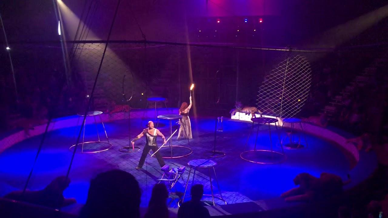 Замученный цирком тигр упал в обморок
