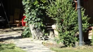 Katze Mimi - Freilaufende Katzenbabys beim Spielen mit Katzenmutter