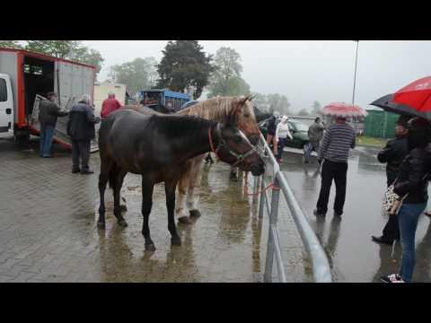 Charków koń patogen