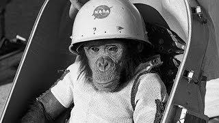 Что случилось с Хэмом в космосе? *Печальная история Хэма и других животных*