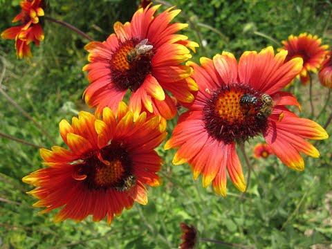 Amazingly beautiful and wonderful flowers! / Удивительно красивые и чудесные цветы!