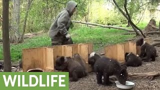 Activist documents feeding time routine for orphaned bear cubs
