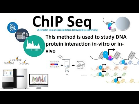 Chip seq (chromatin immuno-precipitation followed by sequencing)