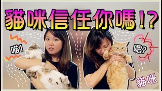 【Annie】Five Ways! Testing Cats' Level of Trust! Watch Out! Don't Be Bitten!