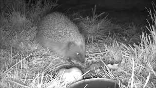 Wildlife Trail Camera - 12.4.2019