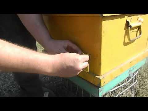 ЧИПирование пчёл в Башкирии