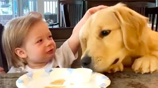 Silly Dogs to Make You Smile | Funny Pet Videos