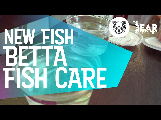 New Bettas - Fish Care - Acclimation and Tips