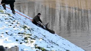 preview picture of video 'Őz mentése a megáradt Tiszából.'
