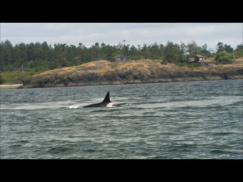 Whale watching isn't the only reason to head to Orcas Island - KING 5 Evening
