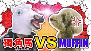 當小狗遇上「持刀暴徒」的實驗?Muffin vs 獨角馬